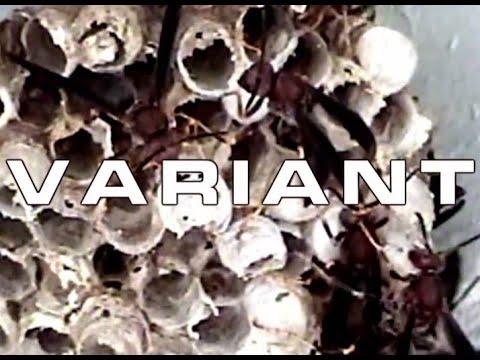 S.O.V. Horror - Variant Trailer